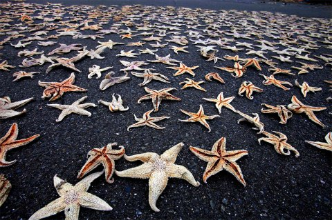 Starfish on the shore marching