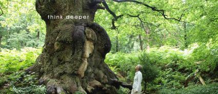 ancient tree love